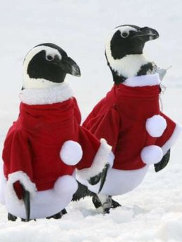 Penguins santa suits