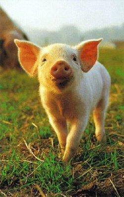 Piggypic_2