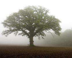Thishereisamustardtree_3