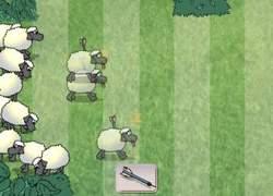 Sheep_reactoin